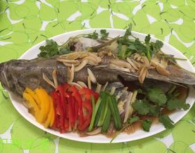 清蒸石斑鱼[图]