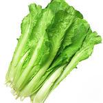 小白菜[图]