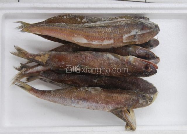 太湖凤尾鱼